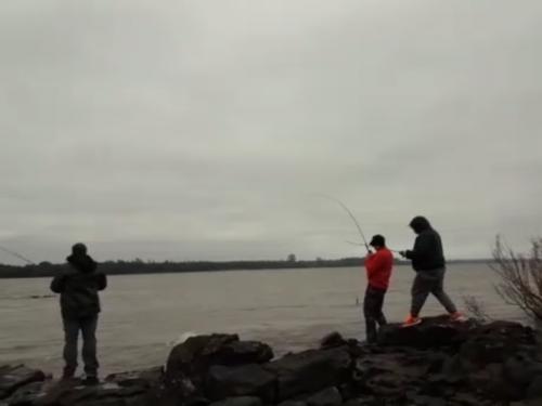 Pesca de dorados ¡¡¡ Excelentes sitios desde la costa o embarcado